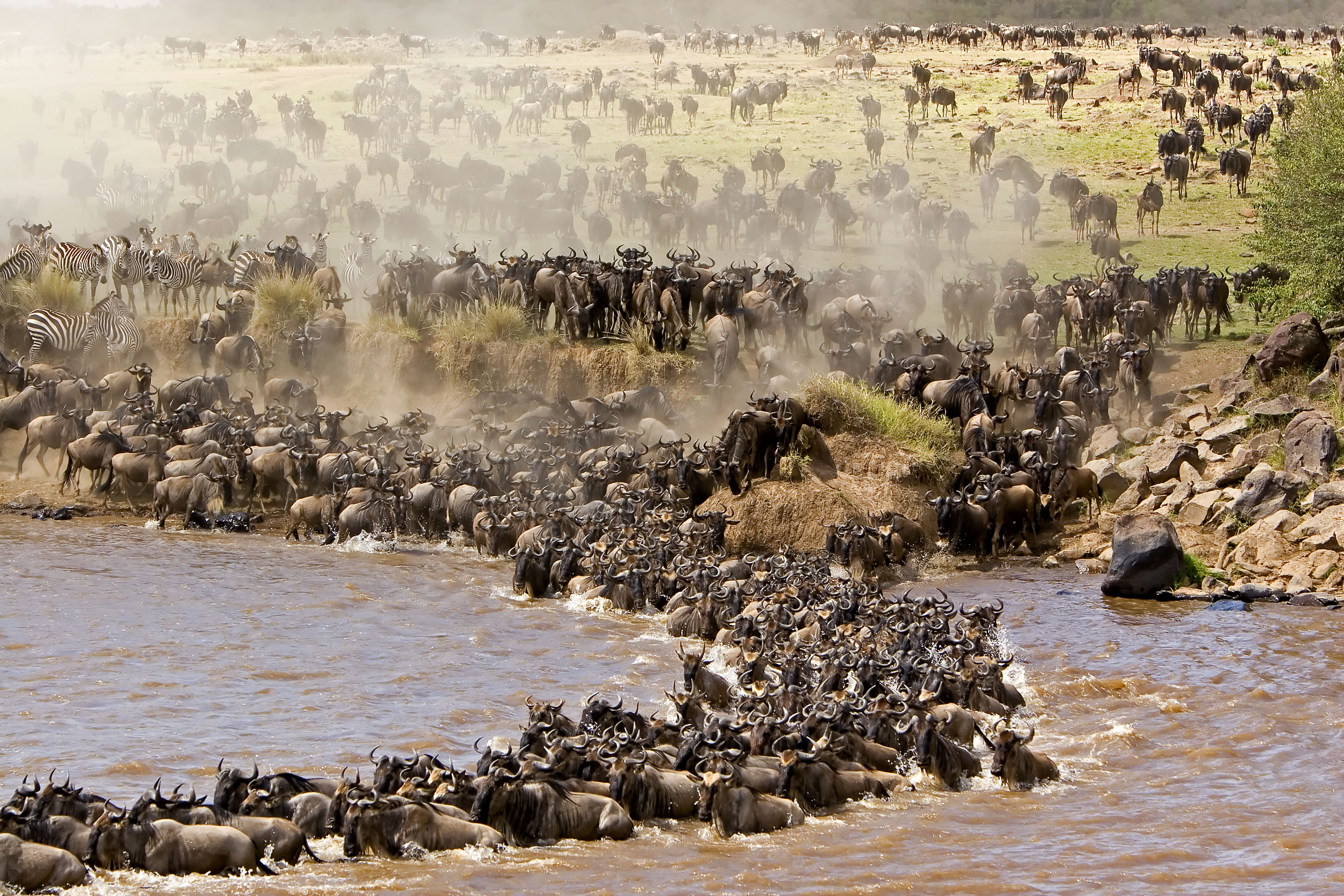 serengeti safari great wildebeest migration