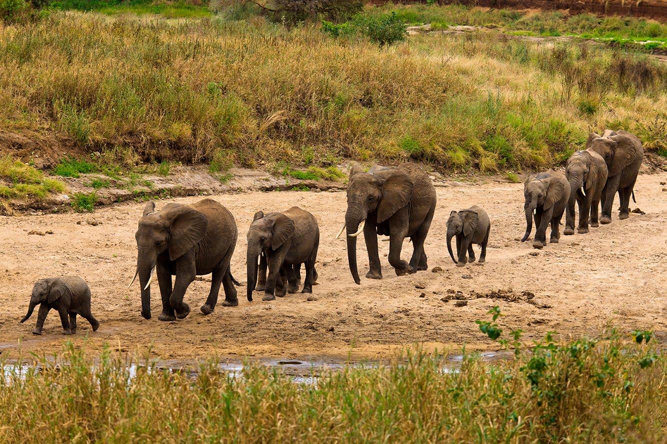 tanzania tarangire home of elephants