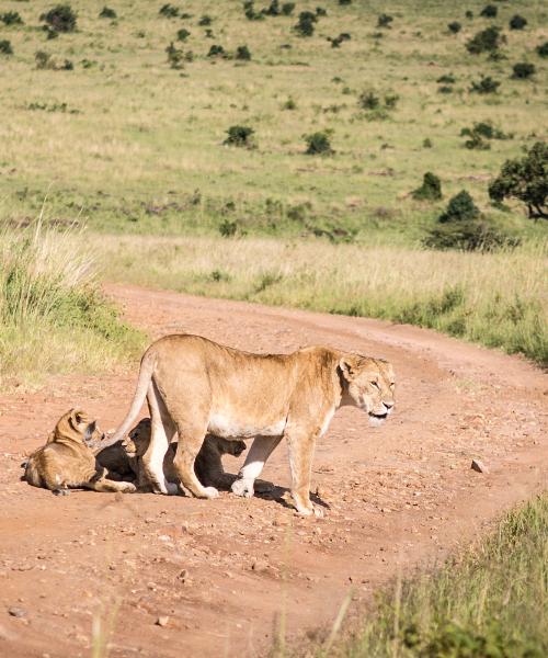 tanzania-short-safari-experience